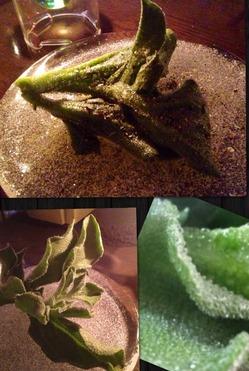 iceplants.JPG