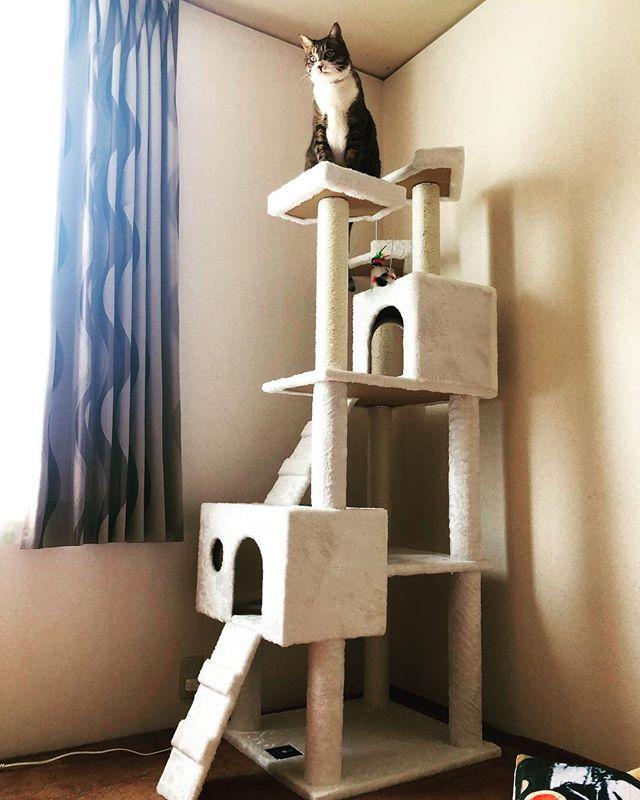キャットタワー設置♪…