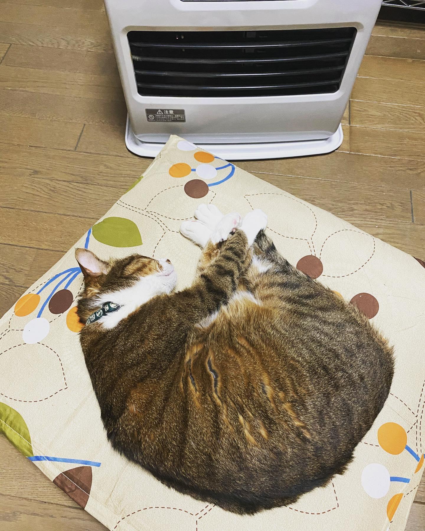 そこ好きな場所だね♪猫は居心地の良い場所... - 金沢片町るたん